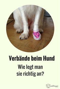 Verband   Hund   selbermachen   Gesundheit