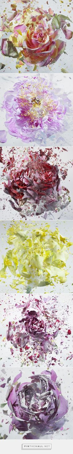 High Speed Flower Explosions by Martin Klimas | Colossal - created via http://pinthemall.net