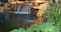 Fynbos Landscapes   Koi Ponds Project 1