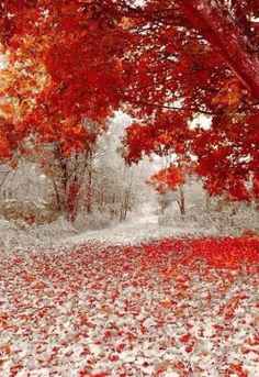 Where Winter and fall meet each other..