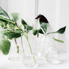 #plants #indoorsgarden, repinned by rheingruen.blogspot.de