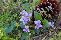 Never abandon hope is the lesson I impart today. On a recent Grumpy Gardener page in Southern Living, I sadly broke terrible news to a reader whose lawn and garden was submerged with violets. There…