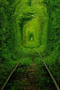 """A las afueras de un minúsculo pueblo llamado Klevan, en Ucrania, se encuentra uno de los pasadizos naturales más notables del planeta. Se trata de un frondoso túnel, perfectamente moldeado, que atraviesa un bosque. Localmente se le conoce como """"Тоннель любви"""" (""""Túnel del amor"""" en ruso)."""