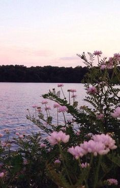 grafika flowers, pink, and nature Beautiful World, Beautiful Places, Beautiful Flowers, Nature Architecture, Lake Photos, All Nature, Flowers Nature, Pink Flowers, Nature Water