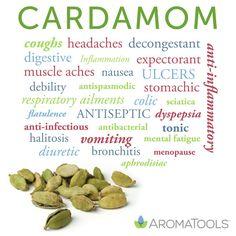 Essential Oil Spotlight: Cardamom. On blog.aromatools.com