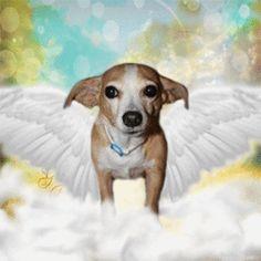 chihuahua angel - Google Search