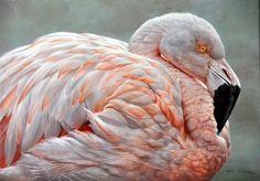 Alan M. Hunt - Flamingo Study (Oil on Masonite Board)