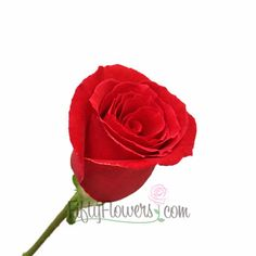 Rouge Baisser Red Rose Rouge Baizer is a rich red rose that would be a wonderful, classic gift for that special someone!