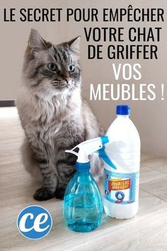 White Vinegar The Finest Repellent to Stop Cats from Scratching Furnishings Furniture Scratches, Animal Room, Exotic Shorthair, All About Cats, Pet Home, White Vinegar, Diy Stuffed Animals, Maine Coon, Dog Supplies