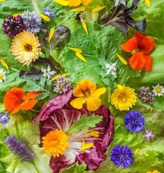 list of Edible Flowers .Don't assume that all flowers are edible – some are highly poisonous. Have a good look at this comprehensive list of flowers. List Of Edible Flowers, Bunch Of Flowers, Potager Garden, Herb Garden, Vegetable Garden, Edible Plants, Edible Garden, Permaculture, Flower Food