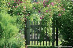 Le rosier 'Francis' Un jardin cousu main près de Chambord