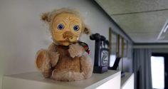 Löysimme tuhansia traumatisoineen Pikku Kakkosen Morson, ja se on vapaalla jalalla! - Kotimaa - Nyt