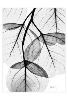 Flowing Eucalyptus in Black and White Art Print