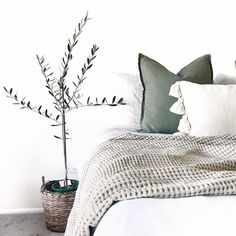 Sage tones olive tree indoor plants adairs white bedding bedroom neutral tones - dream apartment - Home Olive Green Bedrooms, Olive Bedroom, Sage Green Bedroom, Green Bedding, Cozy Bedroom, White Bedding, Bedroom Bed, Bedroom Ideas, Bedroom Inspo