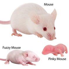 Frozen Mice Reptile Food