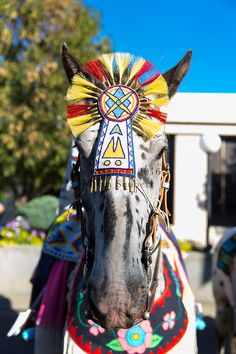 """The Native American or """"Indian"""" Beauty Pageant at the Pendleton Round Up Rodeo, Pendleton OR, USA Pendleton Oregon, Pendleton Round Up, Night Show, All About Horses, Beauty Pageant, Travel Photographer, Rodeo, Indian Beauty, Nativity"""