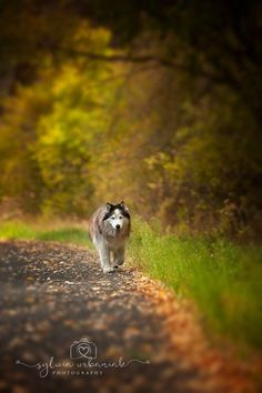 """Photo """"WalkingAlone"""" by SylwiaUrbaniak"""