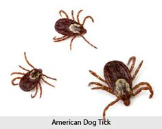 The Best Way to Protect Your Pet from Tick-Borne Disease  Remember that ticks must be attached to your dog for at least 24 hours in order for the disease-causing bacteria to be transmitted from the tick to your pet. That's why daily tick checks and removing ticks immediately is a huge part of reducing your dog's risk of acquiring a tick-borne disease.