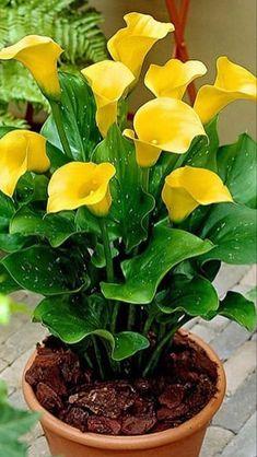 Send Flowers Online | Wholesale Flowers
