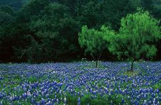 April bluebonnets. | 35 Gorgeous Photographs From Deep In The Heart Of Texas #dfwandbeyond