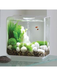 Ideas for the home aquarium - Complete kits versus individual components - Which is better? fish tank ideas Ideas for the home aquarium - Complete kits versus individual components - . Betta Aquarium, Mini Aquarium, Home Aquarium, Planted Aquarium, Fish Aquariums, Small Fish Tanks, Cool Fish Tanks, Reptiles, Aquarium Design
