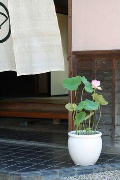 Small Water Gardens, Container Water Gardens, Container Gardening, Ikebana Flower Arrangement, Flower Arrangements, Garden Pond Design, Japan Garden, Garden Entrance, Ponds Backyard