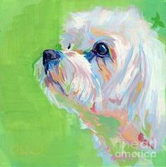 Maltese Art - Parker by Kimberly Santini