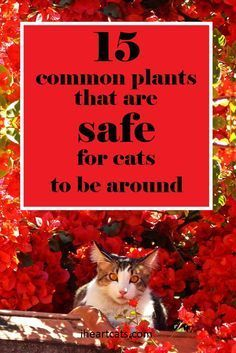 These plants are safe for your cat-friendly home!