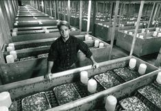 Baton Rouge cricket farmer still looking for ways to innovate after 60 years in business Farm Animals, Animals And Pets, Meal Worms Raising, Cricket Farming, Animal Breeding, Black Soldier Fly, Edible Insects, World Cricket, Beef Cattle