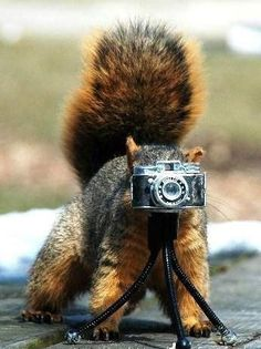 is that the biggest squirrel of all time or the smallest camera of all time? :)