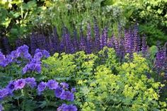 Image result for blue herbaceous border