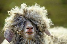 Essa ovelha tem o cabelo parecido com o meu kkkk