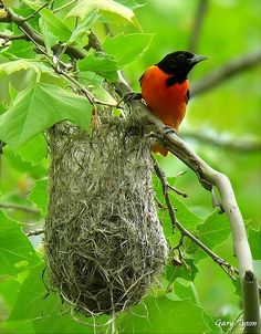 Citizen Science Blog » Top 5 Interesting Nests in North America
