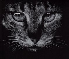 Animal Portraits Feature 26 by animal-portraits on DeviantArt