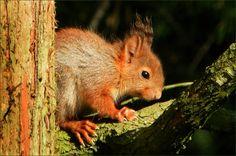 Junges Eichhörnchen - Jahreszeiten - Galerie - Community