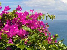 7/17(月)バリ島ウブドのお天気は晴れ。室内温度26.7℃、湿度72%。晴れてきましたねー♪朝は雨が降り気分も沈んでいましたが、太陽のパワーは元気を生みますね♪