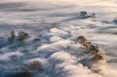 autumnal fog by FiorenzoRondi1. Please Like http://fb.me/go4photos and Follow @go4fotos Thank You. :-)