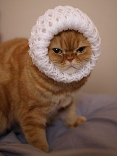 This kitty doesn't look happy.