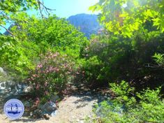 Round trip Crete Greece Ikaros - Zorbas Island apartments in Kokkini Hani, Crete Greece 2020 Different Points Of View, Crete Greece, Hani, Round Trip, Apartments, Island, Plants, Islands, Plant
