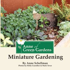 Anne+of+Green+Gardens:+Miniature+Gardening+takes+the+guesswork+out+of+how+to+make+your+own+miniature+garden,+even+if+you+don't+have+a+green+thumb!+Learn+the+basics+to+make+your+very+own+fairy,+beach,+southwest,+English+tea+or+even+gnome+garden.+The+possibilities+are+endless.