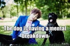 When BTS affects even animals | allkpop Meme Center