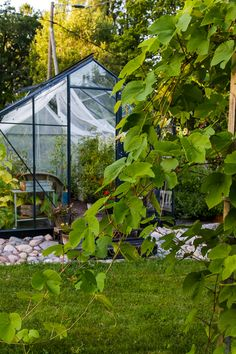 A view from my potager. It´s next my greenhouse. Organic Living, Green Life, Lifestyle, Building, Garden, Outdoor, Outdoors, Garten, Buildings