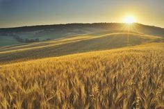 Folklore and Customs of Lammas/Lughnasadh: The Spirit of the Grain