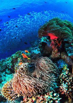 Maldivian Reef