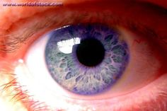 Rare Eye Color | violet eyes rare impossible common violet-blue eye color