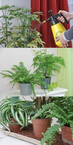 Quand arroser ses plantes d'intérieur?
