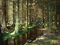 The magical Galloway Forest Park