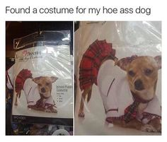 Found a costume for my hoe ass dog