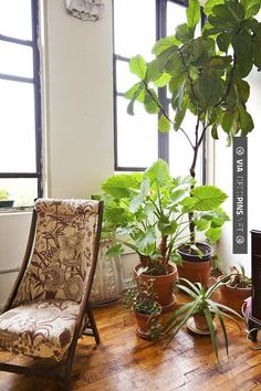 Awesome! plants | CHECK OUT MORE GREAT HOME DECOR IDEAS AT DECOPINS.COM | #homedecor #homedecoration #decorators#decorating #interiordesign #kitchens #kitchenideas