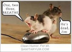 Image result for funny animal pictures with captions clean